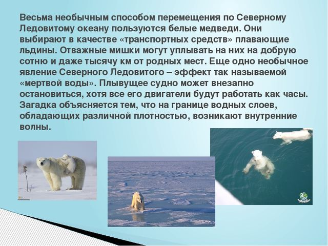 Весьма необычным способом перемещения по Северному Ледовитому океану пользуют...