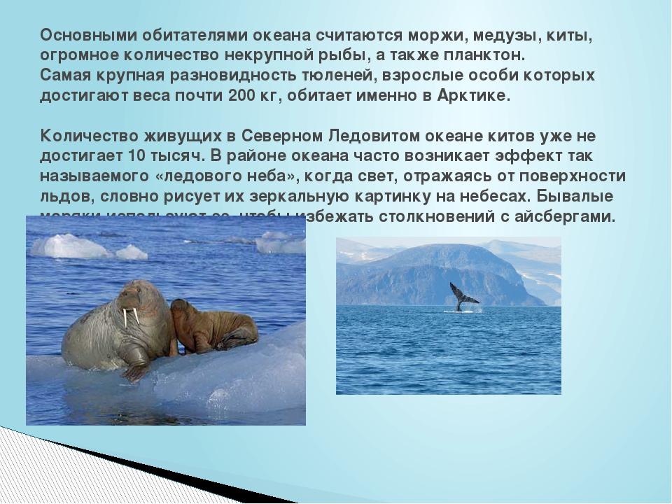 Основными обитателями океана считаются моржи, медузы, киты, огромное количест...