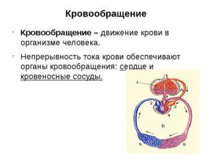Кровообращение Кровообращение – движение крови в организме человека. Непрерыв