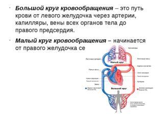 Большой круг кровообращения– это путь крови от левого желудочка через артери