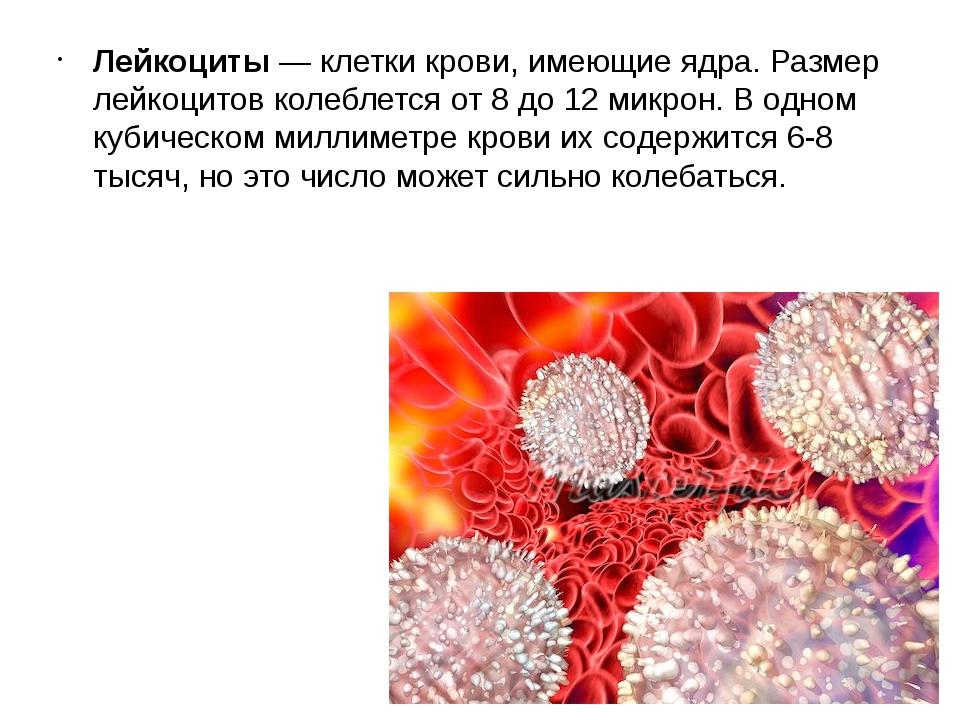 Лейкоциты — клетки крови, имеющие ядра. Размер лейкоцитов колеблется от 8 до...