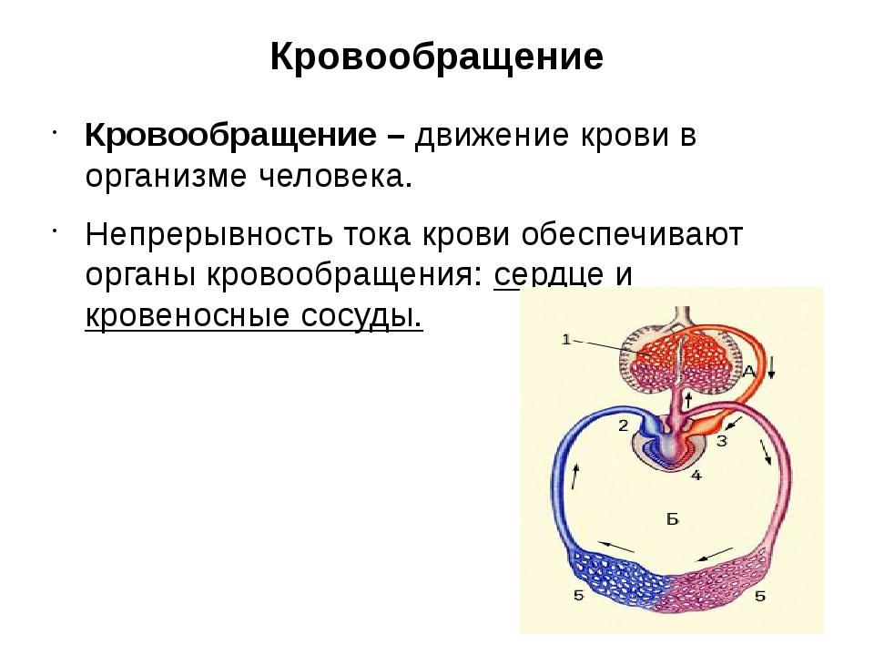 Кровообращение Кровообращение – движение крови в организме человека. Непрерыв...