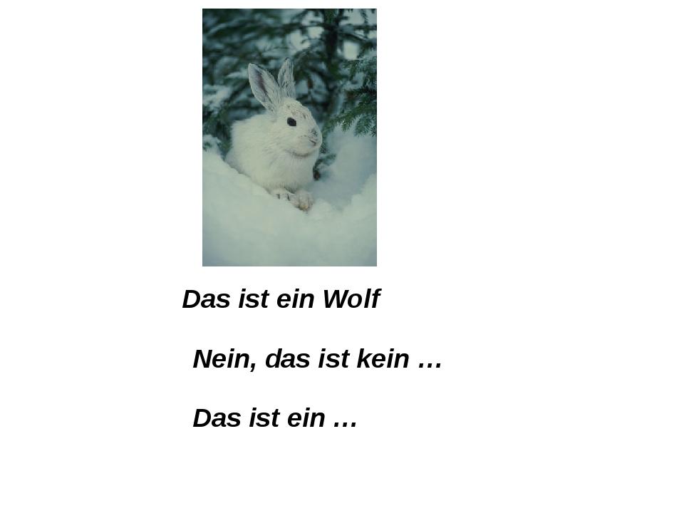 Das ist ein Wolf Nein, das ist kein … Das ist ein …