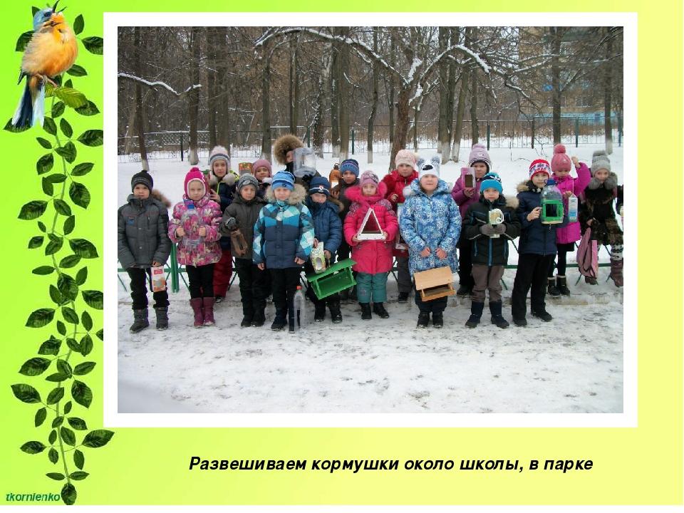 Развешиваем кормушки около школы, в парке