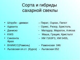 Сорта и гибриды сахарной свеклы Штрубе - дикман – Пират, Оцеан, Пилот Адванта