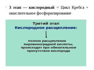 3 этап — кислородный= Цикл Кребса + окислительное фосфорилирование