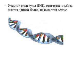 Участок молекулы ДНК, ответственный за синтез одного белка, называетсягеном.
