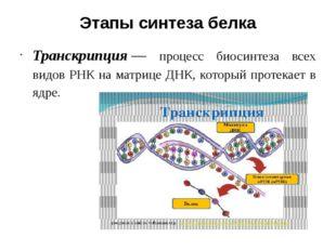 Этапы синтеза белка Транскрипция— процесс биосинтеза всех видов РНК на матри