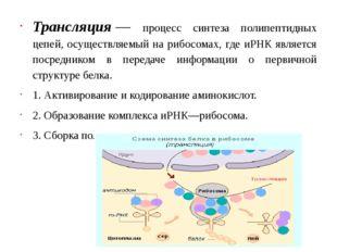 Трансляция— процесс синтеза полипептидных цепей, осуществляемый на рибосомах