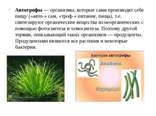 Автотрофы — организмы, которые сами производят себе пищу («авто-» сам, «троф-