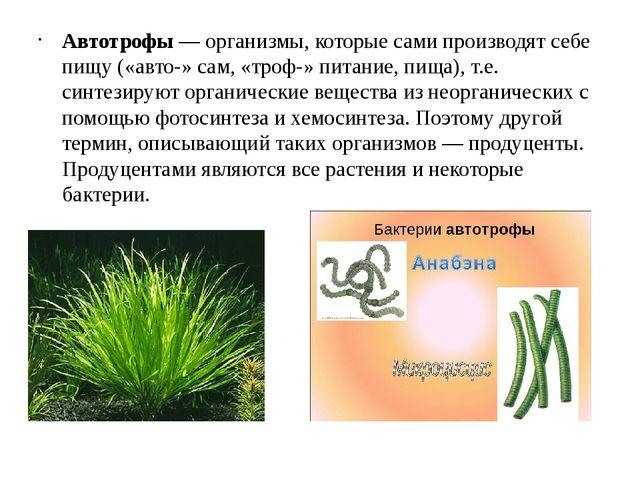 Автотрофы — организмы, которые сами производят себе пищу («авто-» сам, «троф-...