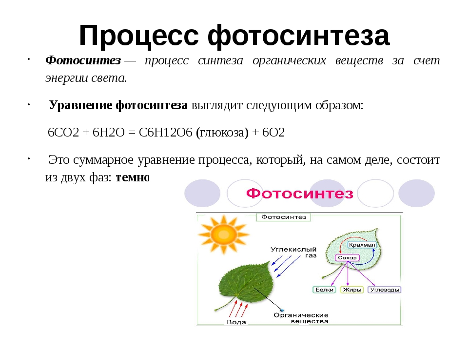 Процесс фотосинтеза Фотосинтез— процесс синтеза органических веществ за счет...