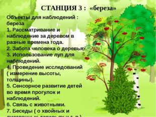 СТАНЦИЯ 3 : «береза» Объекты для наблюдений : береза 1. Рассматривание и набл