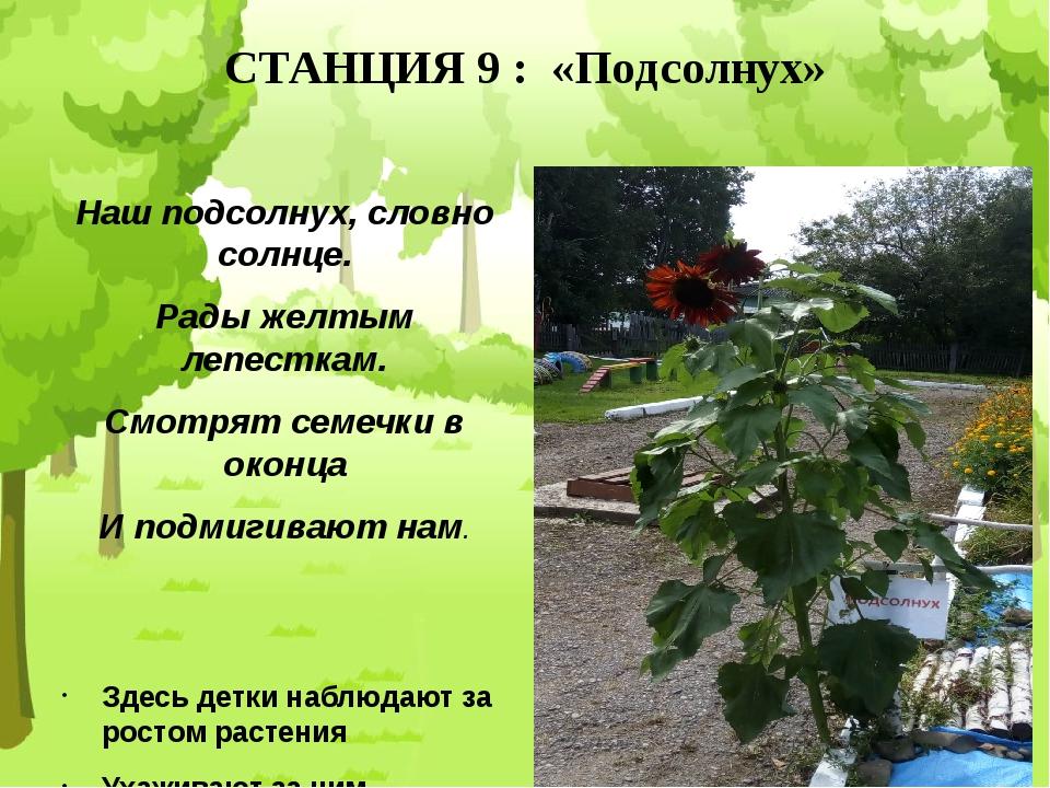 СТАНЦИЯ 9 : «Подсолнух» Наш подсолнух, словно солнце. Рады желтым лепесткам....