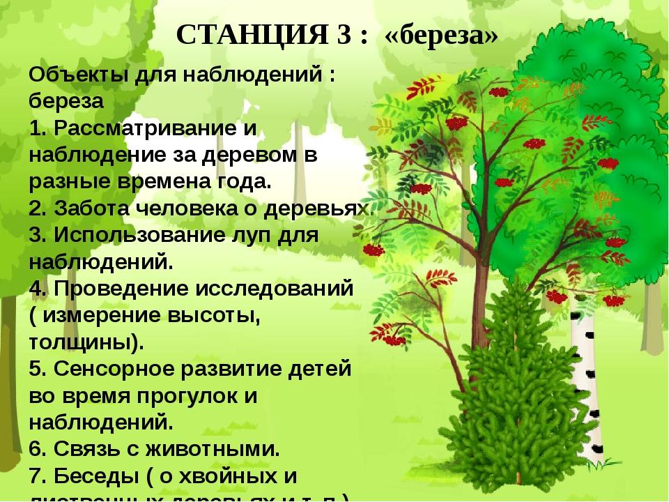 СТАНЦИЯ 3 : «береза» Объекты для наблюдений : береза 1. Рассматривание и набл...