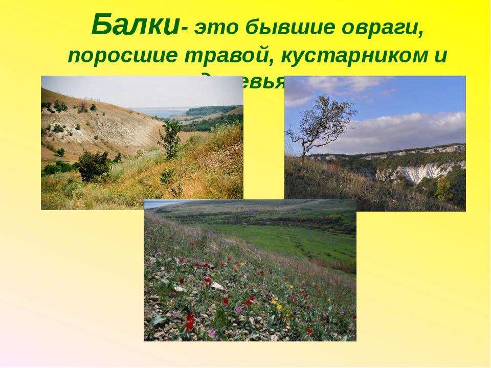 Балки- это бывшие овраги, поросшие травой, кустарником и деревьями