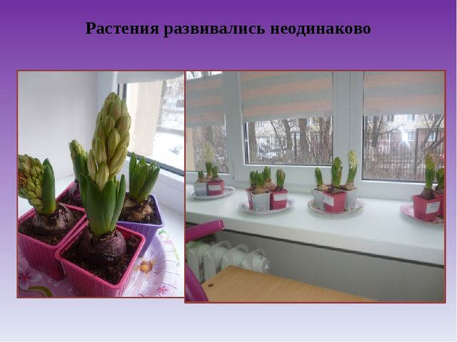 Растения развивались неодинаково