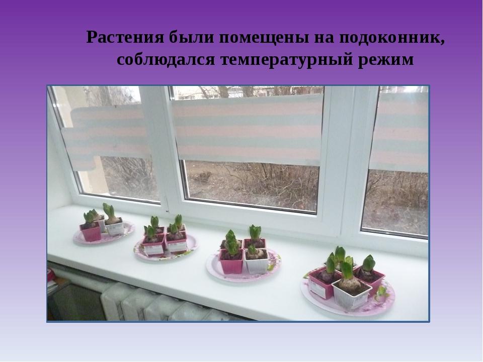 Растения были помещены на подоконник, соблюдался температурный режим