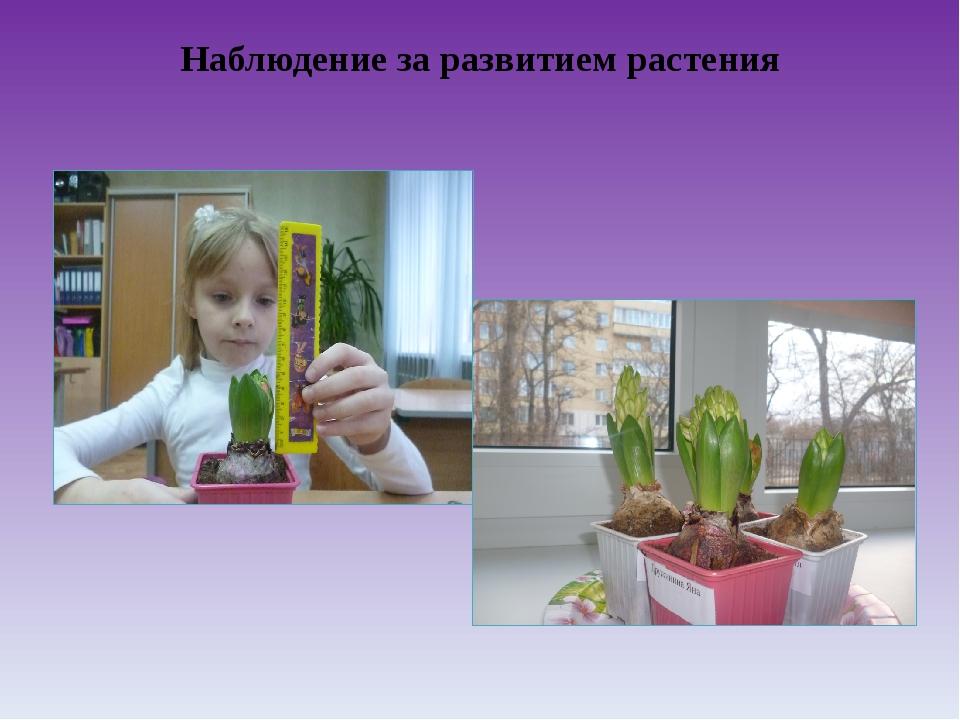 Наблюдение за развитием растения