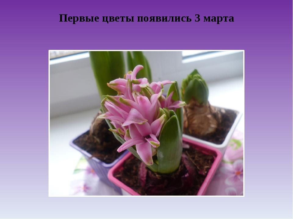 Первые цветы появились 3 марта