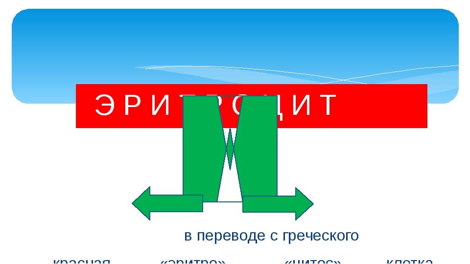 Э Р И Т Р О Ц И Т в переводе с греческого красная «эритро» «цитос» клетка