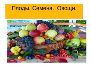 Плоды. Семена. Овощи.