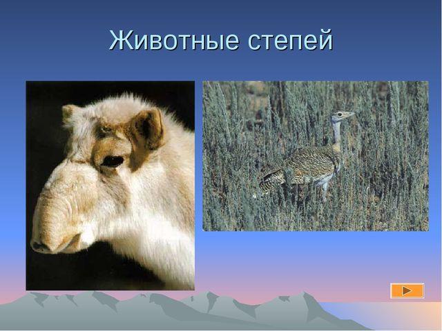 Животные степей
