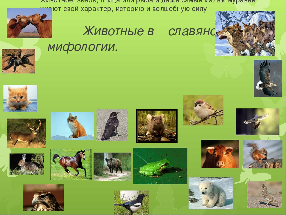 Животные в славянской мифологии. Славяне верили, что все мы наделены разными...