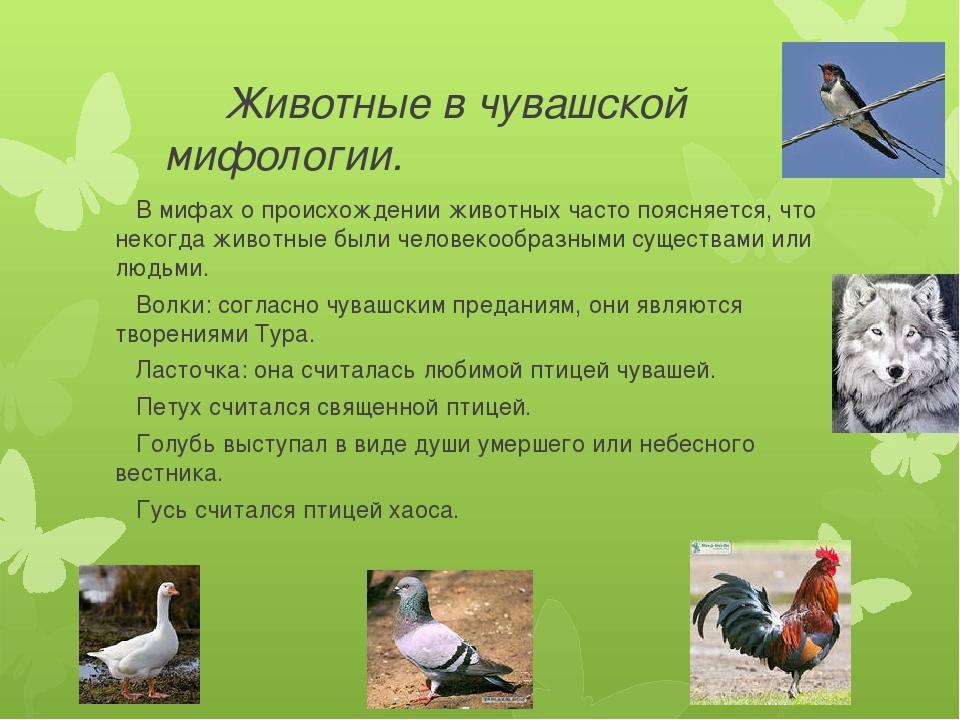 Животные в чувашской мифологии. В мифах о происхождении животных часто поясн...