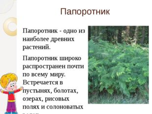 Папоротник Папоротник - одно из наиболее древних растений. Папоротник широко