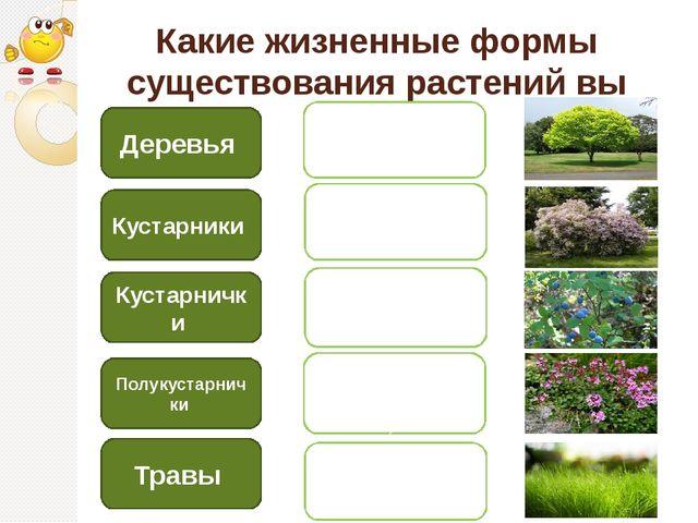 Какие жизненные формы существования растений вы знаете? Деревья Кустарники Ку...