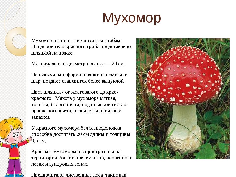 Мухомор Мухомор относится к ядовитым грибам Плодовое тело красного гриба пред...