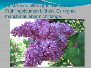 Im Mai wird alles grün. Die ersten Frühlingsblumen blühen. Es regnet manchmal