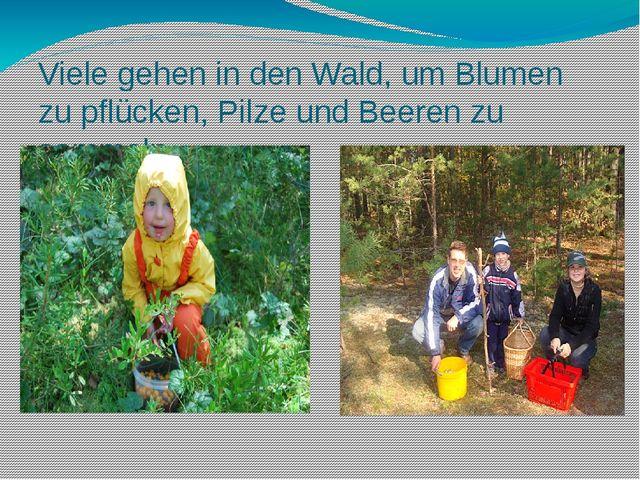 Viele gehen in den Wald, um Blumen zu pflücken, Pilze und Beeren zu sammeln.