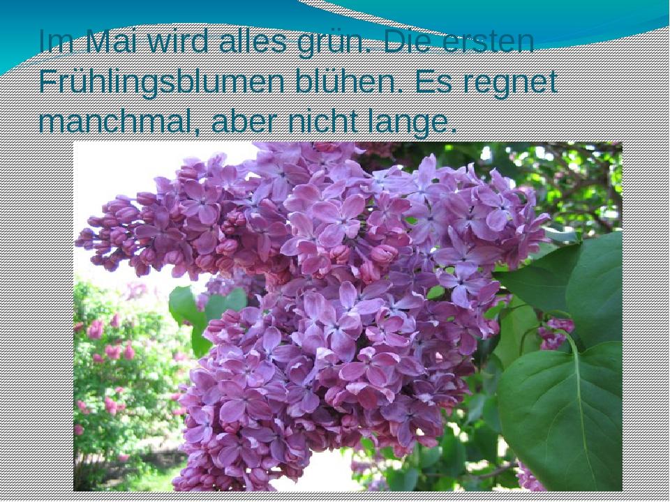 Im Mai wird alles grün. Die ersten Frühlingsblumen blühen. Es regnet manchmal...