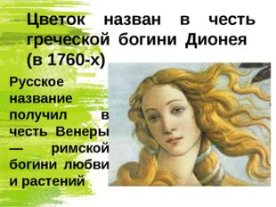 Цветок назван в честь греческой богини Дионея (в 1760-х) Русское название пол