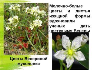 Молочно-белые цветы и листья изящной формы вдохновили ученых дать цветку имя