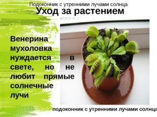Уход за растением Венерина мухоловка нуждается в свете, но не любит прямые со