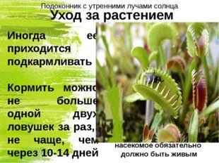 Уход за растением Иногда ее приходится подкармливать Кормить можно не больше
