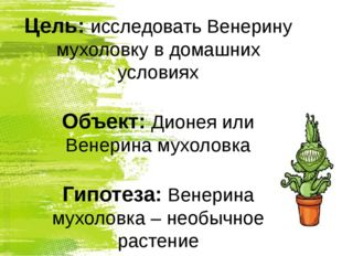 Цель: исследовать Венерину мухоловку в домашних условиях Объект: Дионея или В