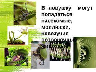 В ловушку могут попадаться насекомые, моллюски, невезучие позвоночные животные