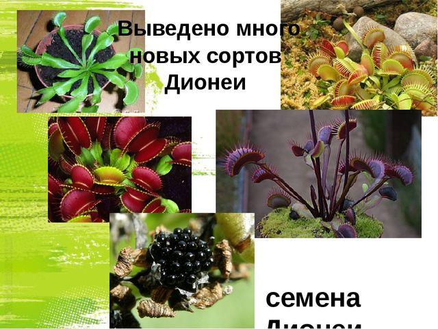 Выведено много новых сортов Дионеи семена Дионеи
