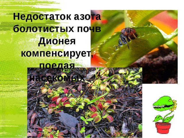 Недостаток азота болотистых почв Дионея компенсирует, поедая насекомых
