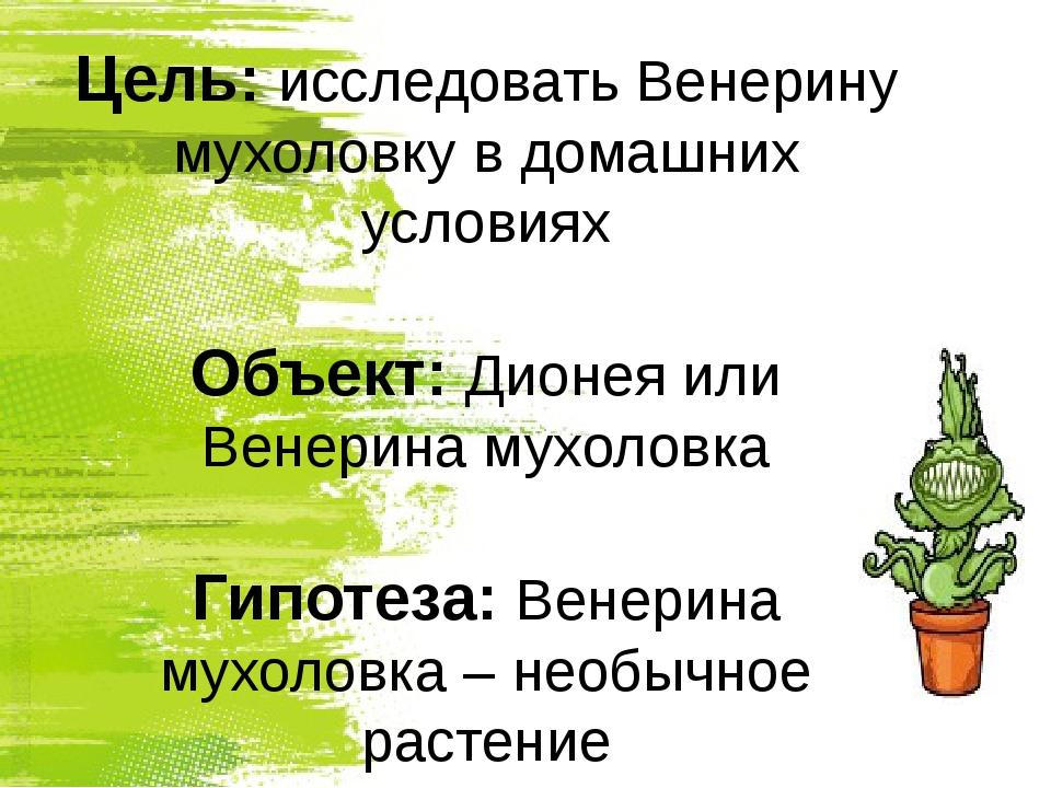 Цель: исследовать Венерину мухоловку в домашних условиях Объект: Дионея или В...