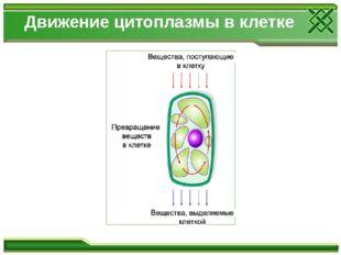 Движение цитоплазмы в клетке