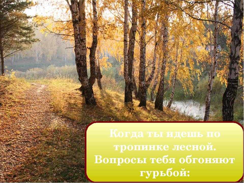 Когда ты идешь по тропинке лесной. Вопросы тебя обгоняют гурьбой: Попкова Т.В...