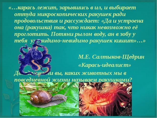 «…карась лежит, зарывшись в ил, и выбирает оттуда микроскопических ракушек ра...