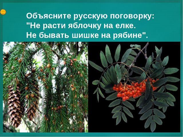 """Объясните русскую поговорку: """"Не расти яблочку на елке. Не бывать шишке на ря..."""