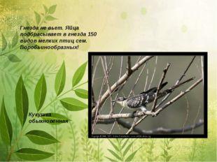 Гнезда не вьет. Яйца подбрасывает в гнезда 150 видов мелких птиц сем. Воробьи