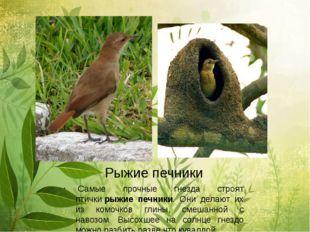 Рыжие печники Самые прочные гнезда строят птичкирыжие печники. Они делают и